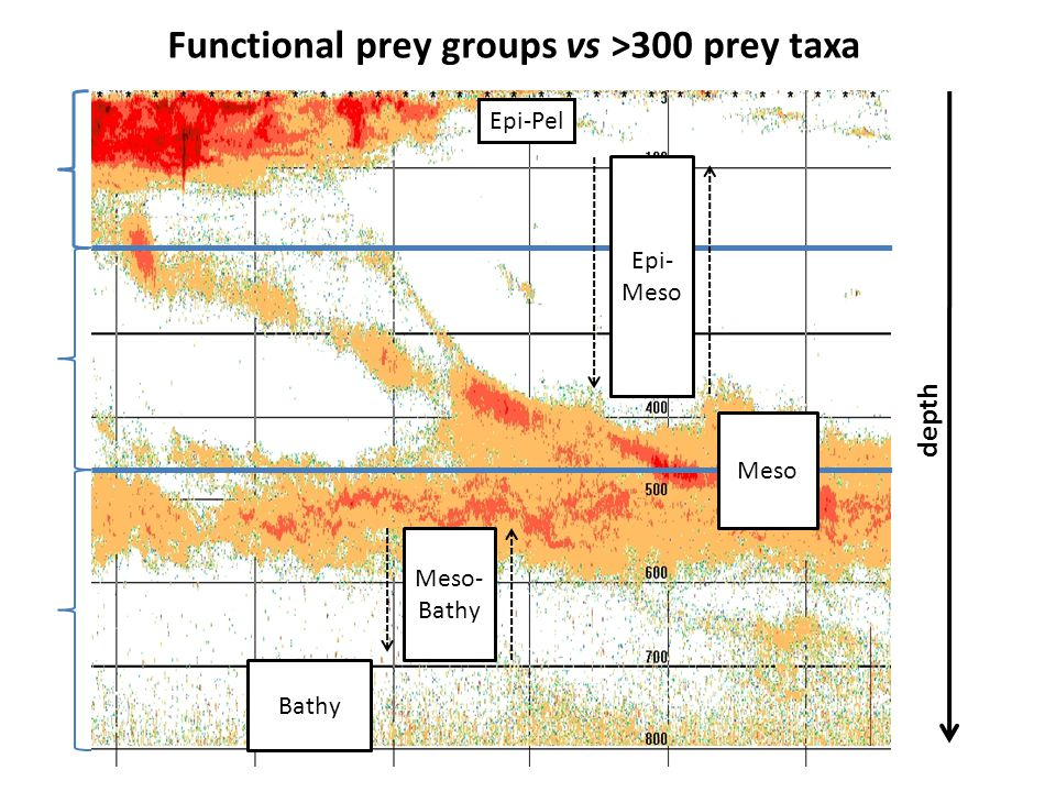 Epi-Pel Epi- Meso Meso Bathy Meso- Bathy Functional prey groups vs >300 prey taxa depth