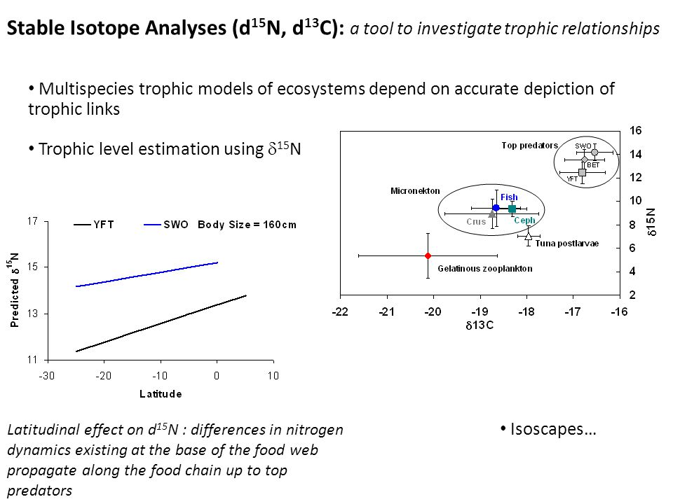 Multispecies trophic models of ecosystems depend on accurate depiction of trophic links Trophic level estimation using 15 N Stable Isotope Analyses (d 15 N, d 13 C): a tool to investigate trophic relationships Latitudinal effect on d 15 N : differences in nitrogen dynamics existing at the base of the food web propagate along the food chain up to top predators Isoscapes…