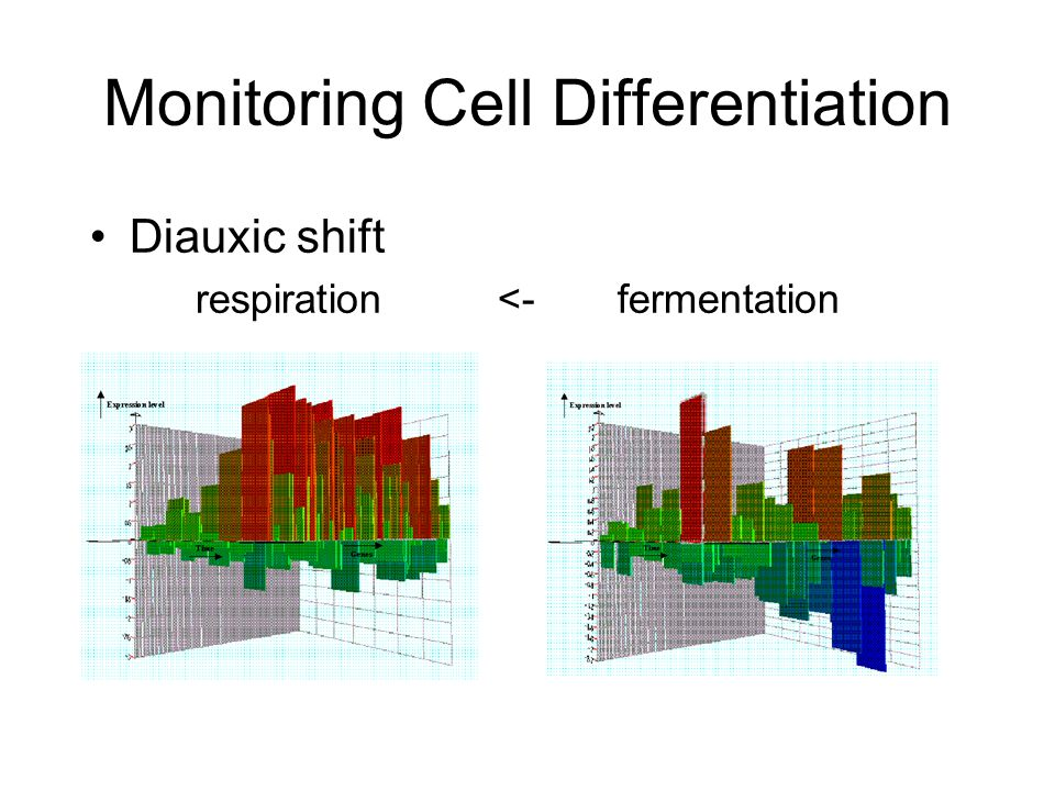 Diauxic shift respiration <-fermentation Monitoring Cell Differentiation