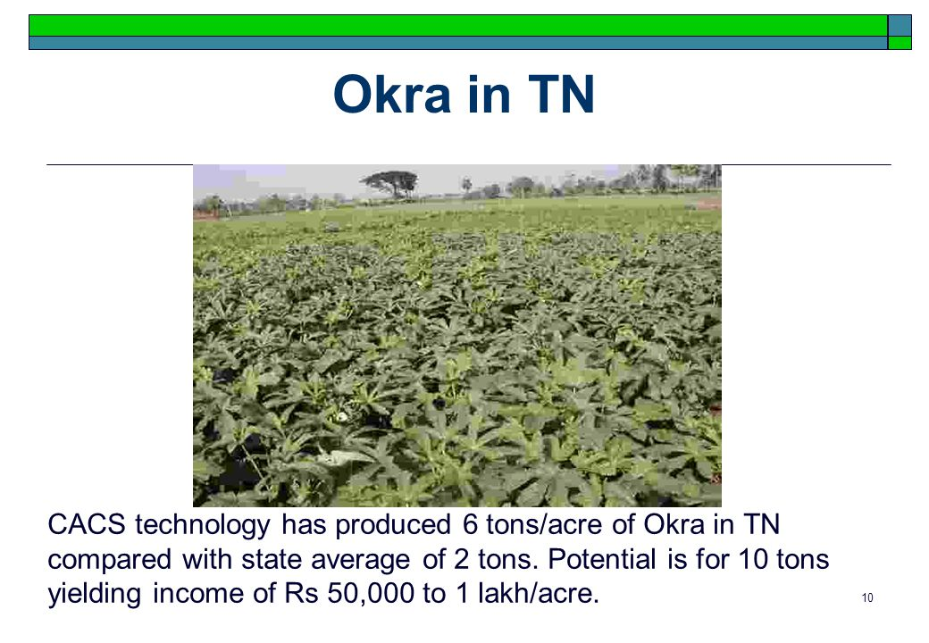 10 Okra in TN CACS technology has produced 6 tons/acre of Okra in TN compared with state average of 2 tons.