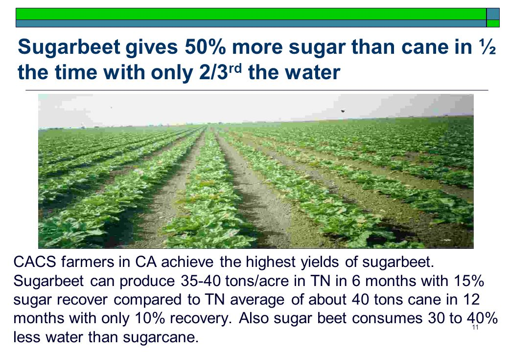 11 Sugarbeet gives 50% more sugar than cane in ½ the time with only 2/3 rd the water CACS farmers in CA achieve the highest yields of sugarbeet.