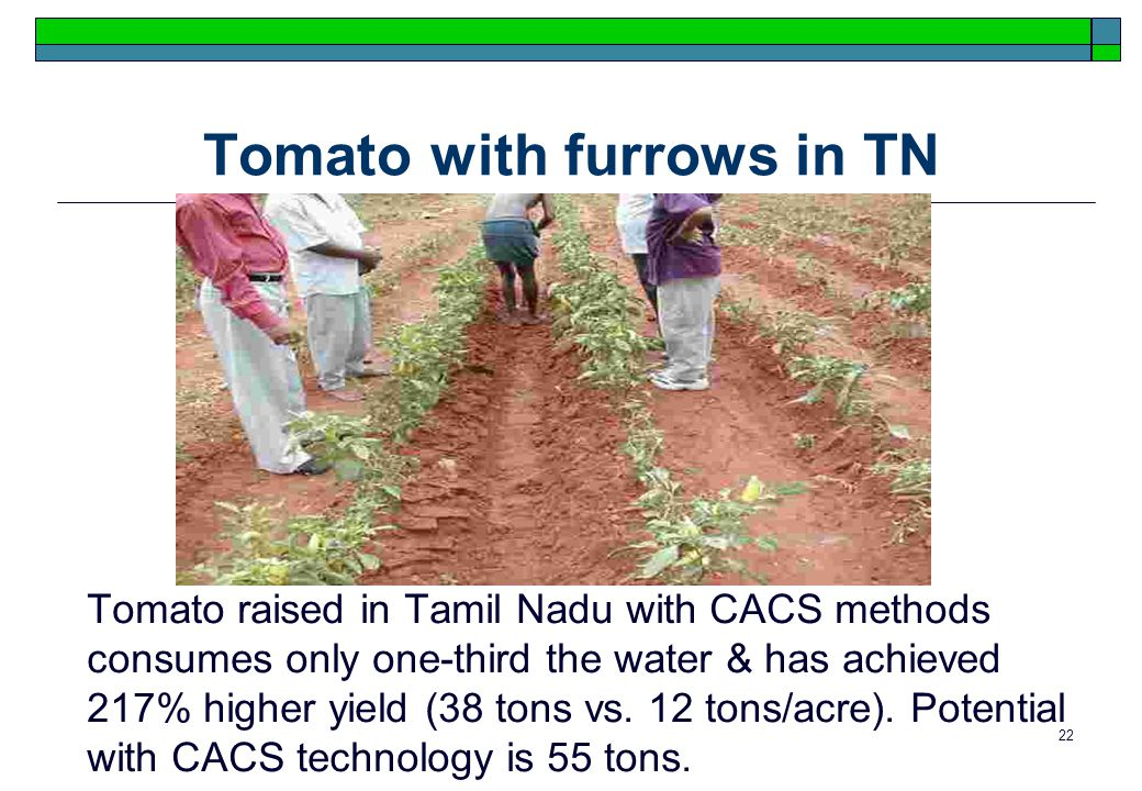 22 Tomato with furrows in TN Tomato raised in Tamil Nadu with CACS methods consumes only one-third the water & has achieved 217% higher yield (38 tons vs.