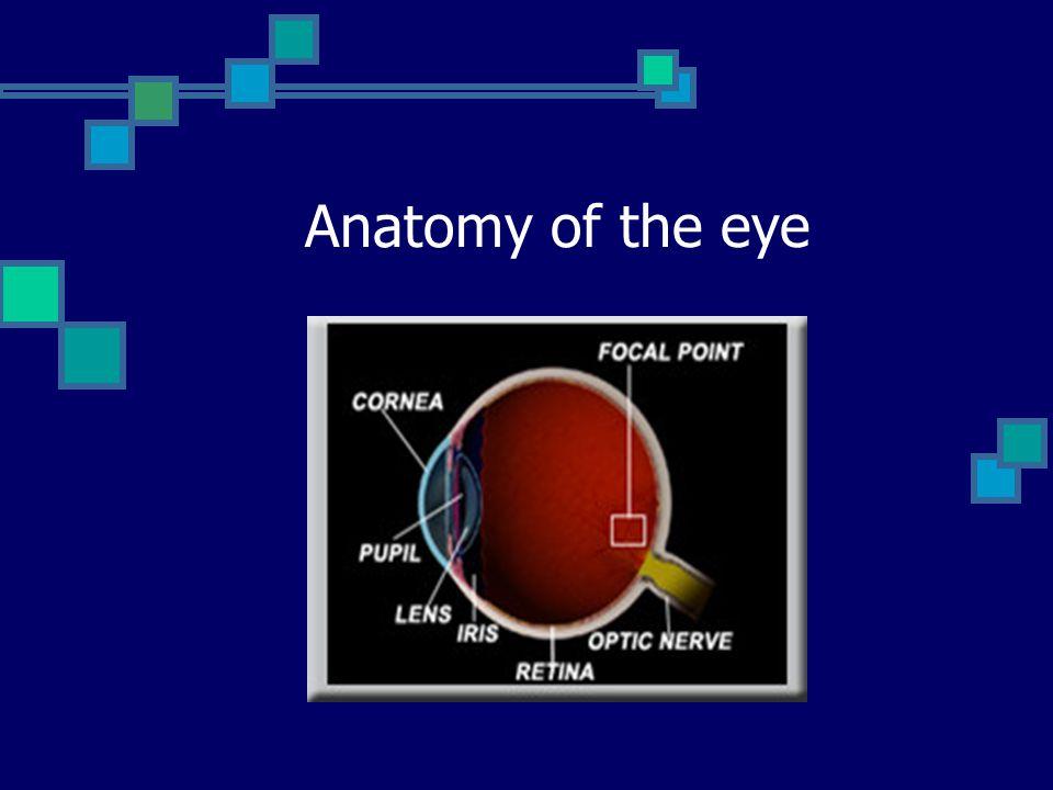 How the eye work Cornea = Lens Cover Iris and Pupil = Aperture of Camera Lens = Camera s Lenses Retina = Camera s Film