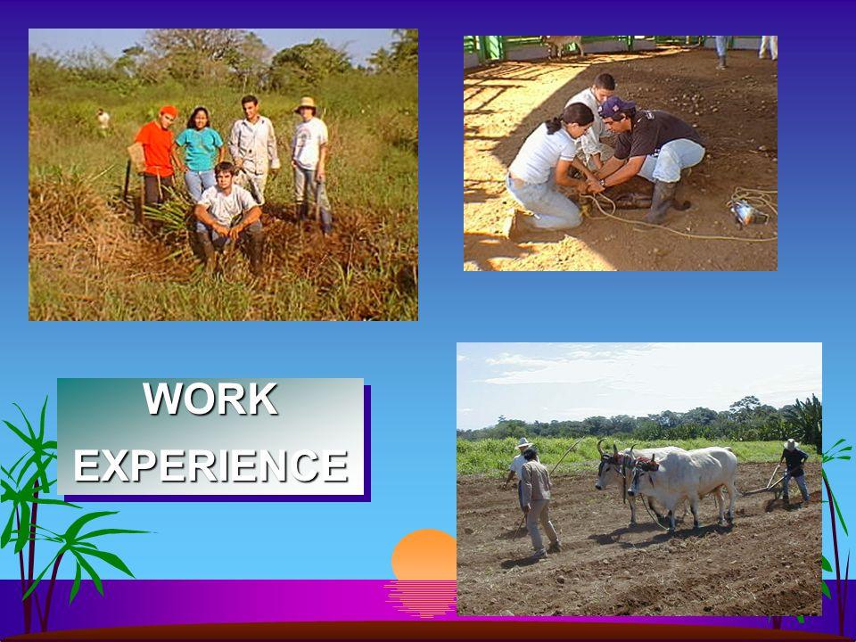 WORKEXPERIENCEWORKEXPERIENCE