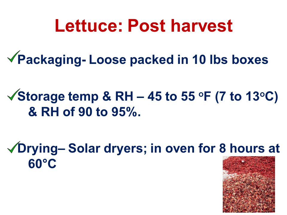 Packaging- Loose packed in 10 lbs boxes Storage temp & RH – 45 to 55 o F (7 to 13 o C) & RH of 90 to 95%.