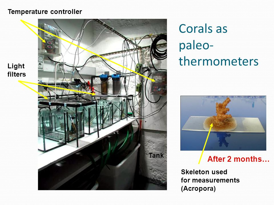 Light filters Temperature controller Tank After 2 months… Skeleton used for measurements (Acropora) Corals as paleo- thermometers