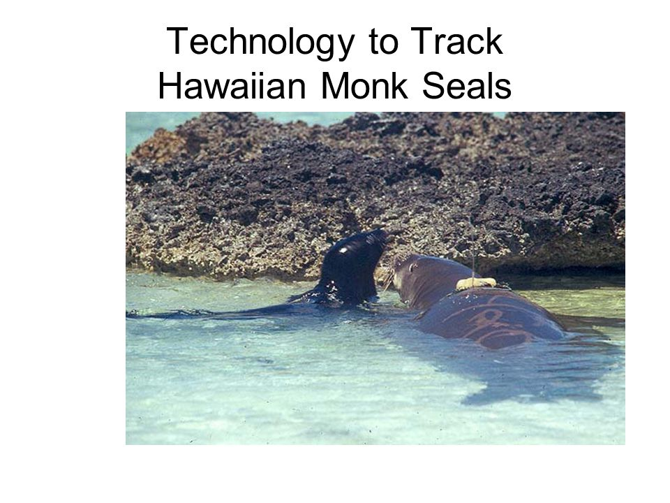 Technology to Track Hawaiian Monk Seals
