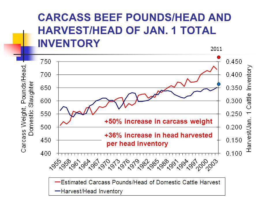 CARCASS BEEF POUNDS/HEAD AND HARVEST/HEAD OF JAN.