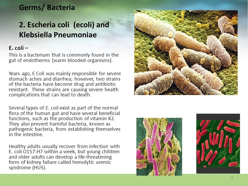 Germs/ Bacteria 2. Escheria coli (ecoli) and Klebsiella Pneumoniae E. coli – This is a bacterium that is commonly found in the gut of endotherms (warm