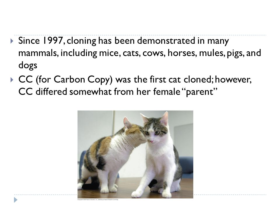 Since 1997, cloning has been demonstrated in many mammals, including mice, cats, cows, horses, mules, pigs, and dogs CC (for Carbon Copy) was the firs