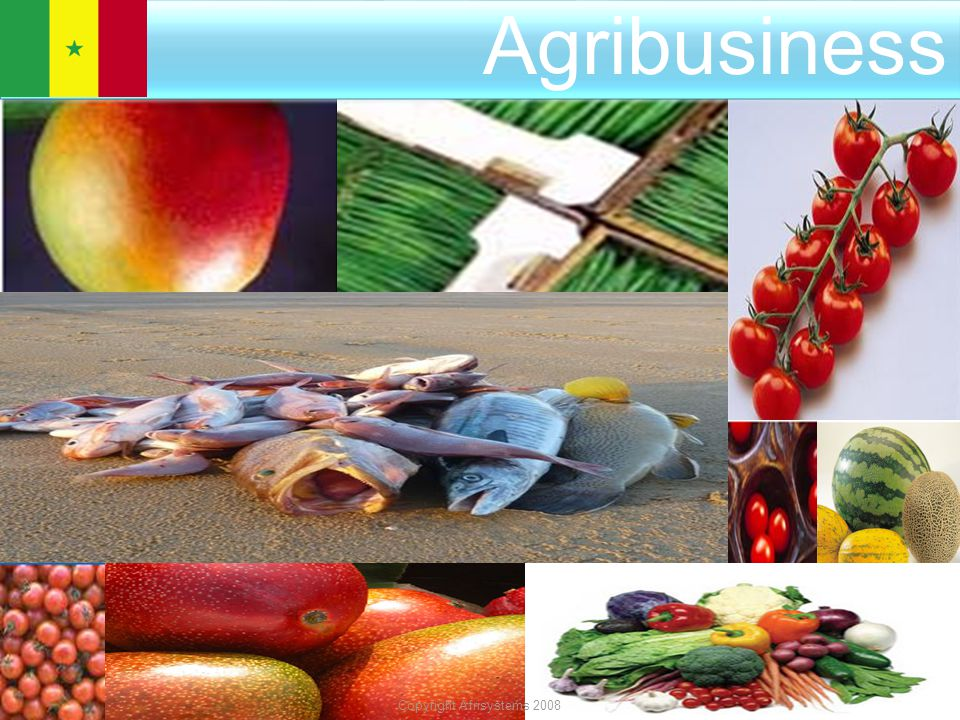 Sénégal AGRIBUSINESS INVESTMENT OPPORTINUTY Agribusiness Copyright Afrisystems 2008