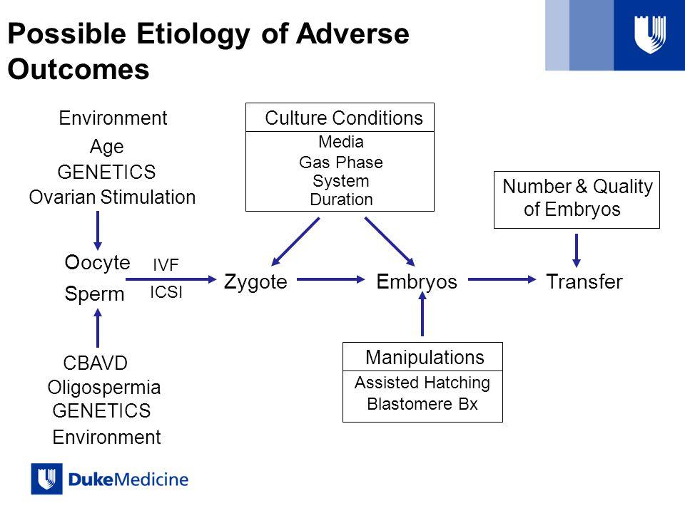 Oocyte Sperm Zygote Embryos Transfer CBAVD Oligospermia GENETICS Environment Age GENETICS Ovarian Stimulation Culture Conditions Media Gas Phase Syste