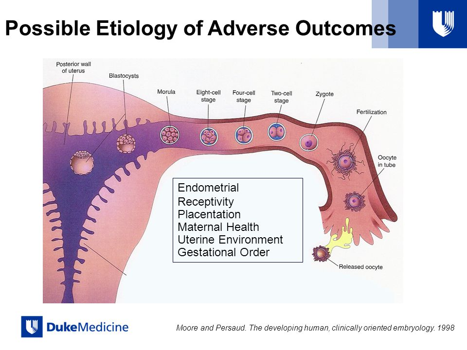 Endometrial Receptivity Placentation Maternal Health Uterine Environment Gestational Order Moore and Persaud. The developing human, clinically oriente