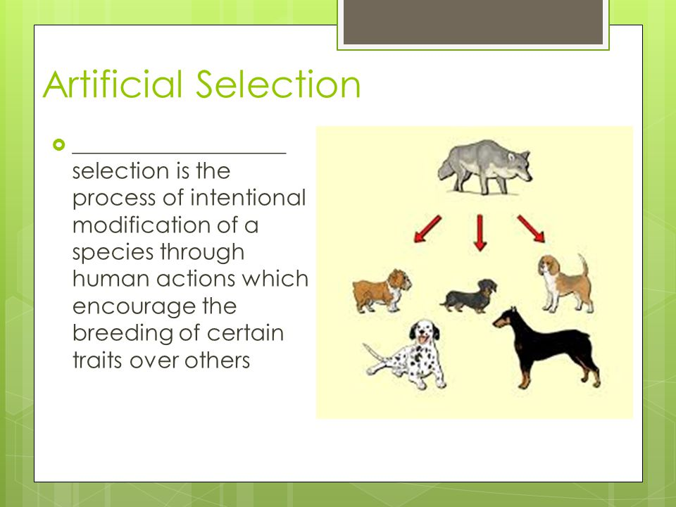 Artificial Selection ___________________ selection is the process of intentional modification of a species through human actions which encourage the b