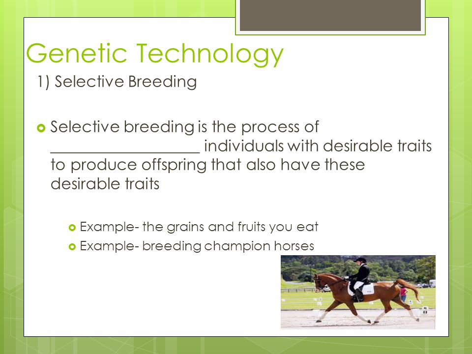 Genetic Technology 1) Selective Breeding Selective breeding is the process of ___________________ individuals with desirable traits to produce offspri
