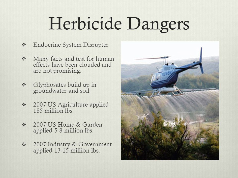 Herbicide Dangers Endocrine System Disrupter Many facts and test for human effects have been clouded and are not promising.