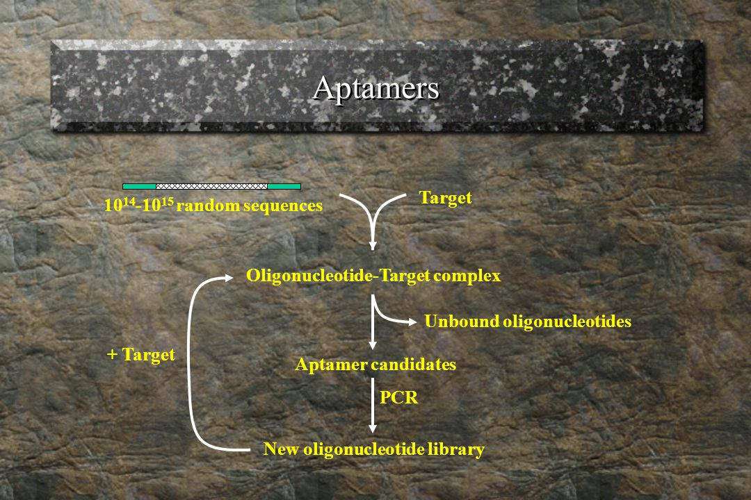 Aptamers 10 14 -10 15 random sequences Target Oligonucleotide-Target complex Unbound oligonucleotides Aptamer candidates PCR New oligonucleotide library + Target