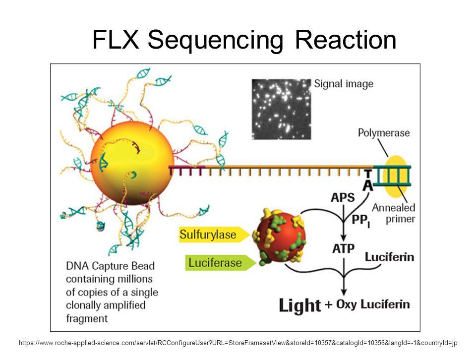 FLX Sequencing Reaction https://www.roche-applied-science.com/servlet/RCConfigureUser?URL=StoreFramesetView&storeId=10357&catalogId=10356&langId=-1&co