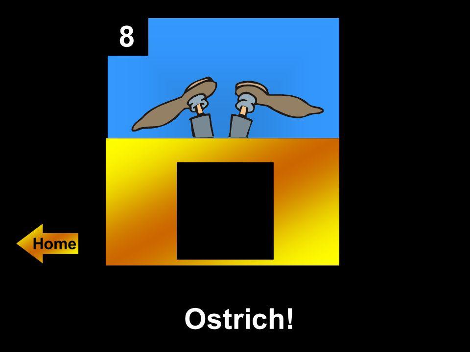 8 Ostrich!