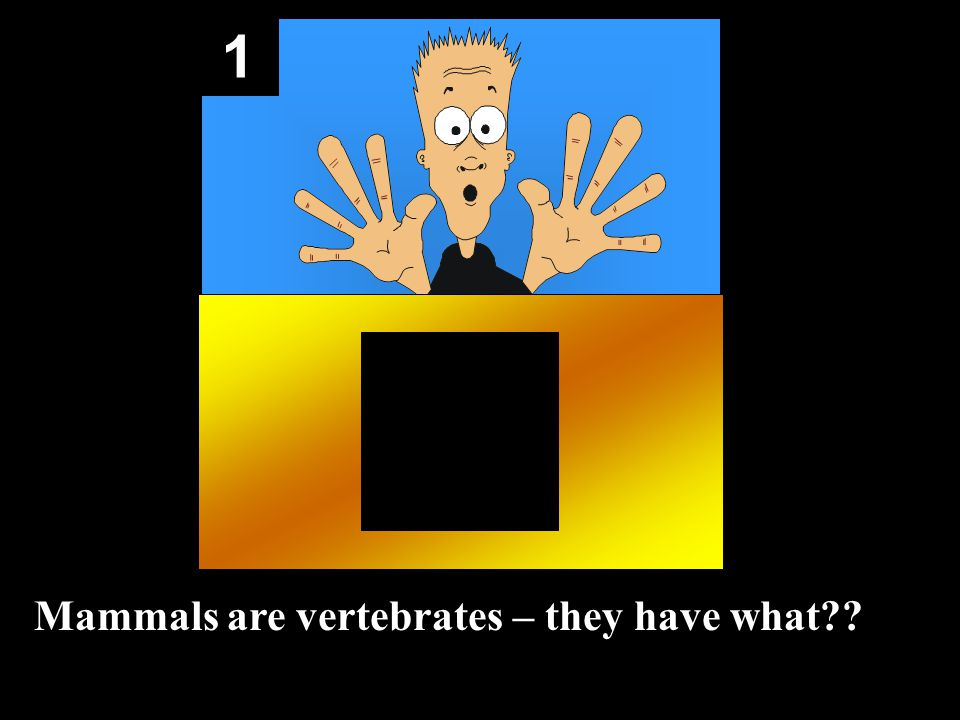1 Mammals are vertebrates – they have what