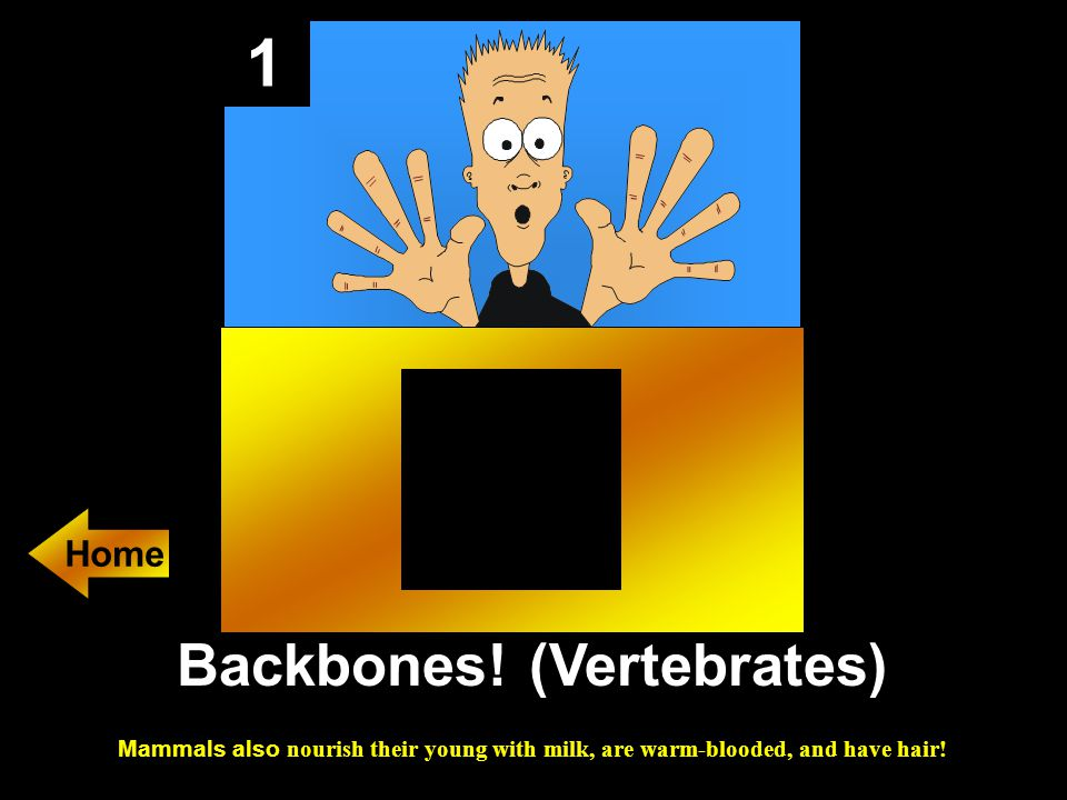 1 Backbones! (Vertebrates) Mammals also nourish their young with milk, are warm-blooded, and have hair! Home
