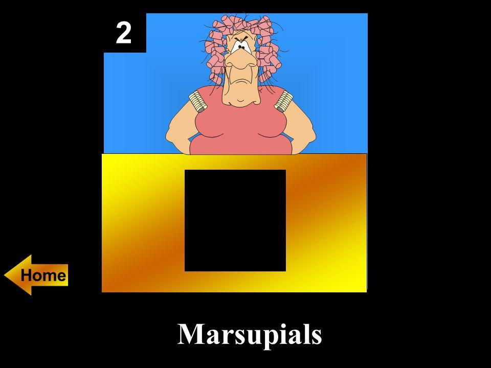 2 Marsupials Home