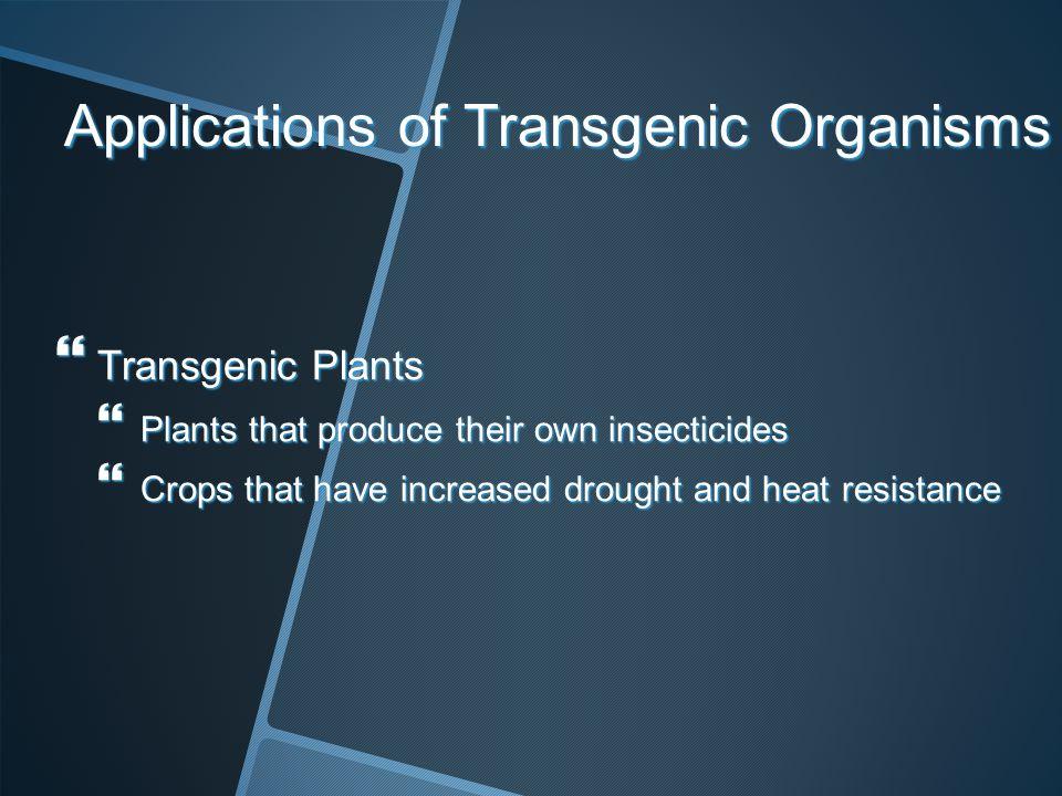 Applications of Transgenic Organisms Transgenic Plants Transgenic Plants Plants that produce their own insecticides Plants that produce their own inse