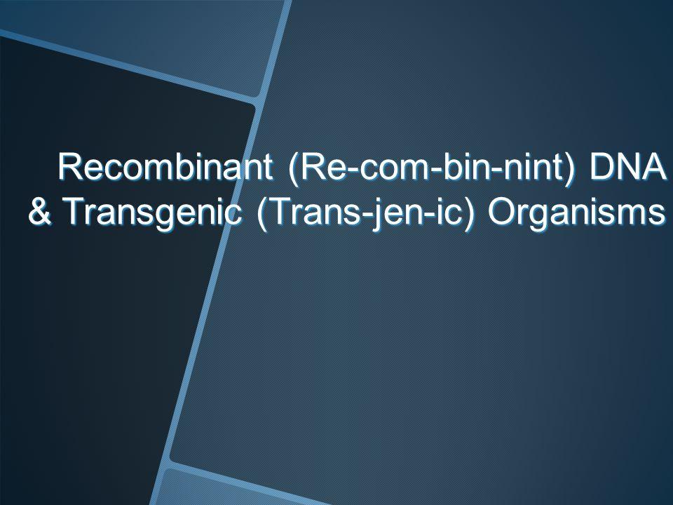Recombinant (Re-com-bin-nint) DNA & Transgenic (Trans-jen-ic) Organisms