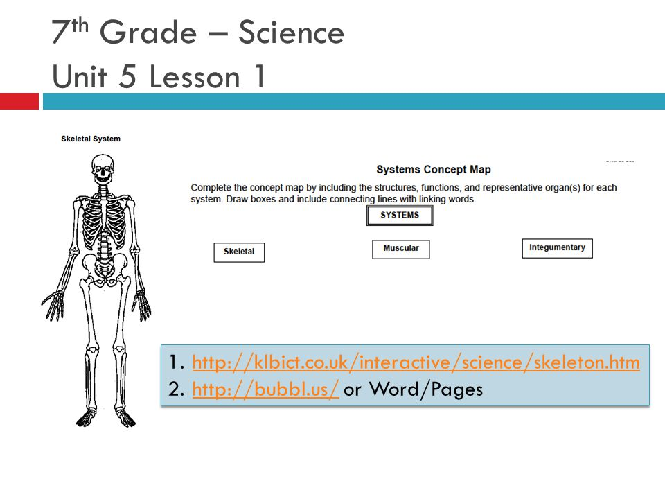 7 th Grade – Science Unit 5 Lesson 1 1.http://klbict.co.uk/interactive/science/skeleton.htmhttp://klbict.co.uk/interactive/science/skeleton.htm 2.http://bubbl.us/ or Word/Pageshttp://bubbl.us/ 1.http://klbict.co.uk/interactive/science/skeleton.htmhttp://klbict.co.uk/interactive/science/skeleton.htm 2.http://bubbl.us/ or Word/Pageshttp://bubbl.us/