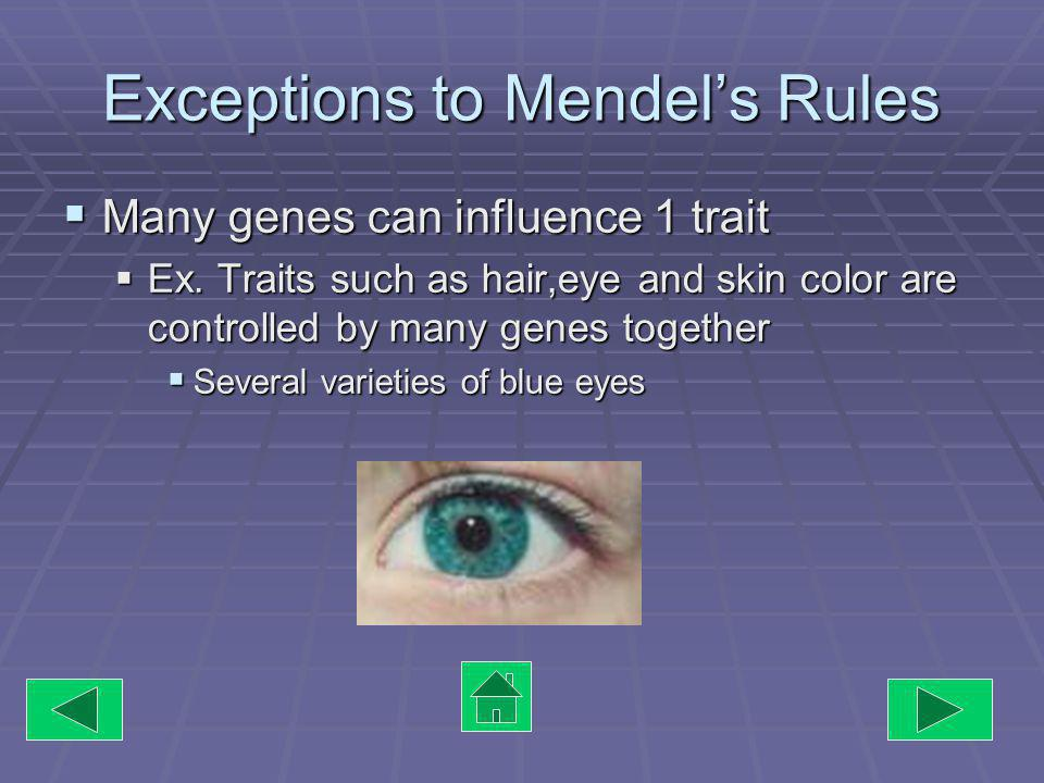 Exceptions to Mendels Rules One gene can influence more than one trait One gene can influence more than one trait EX.