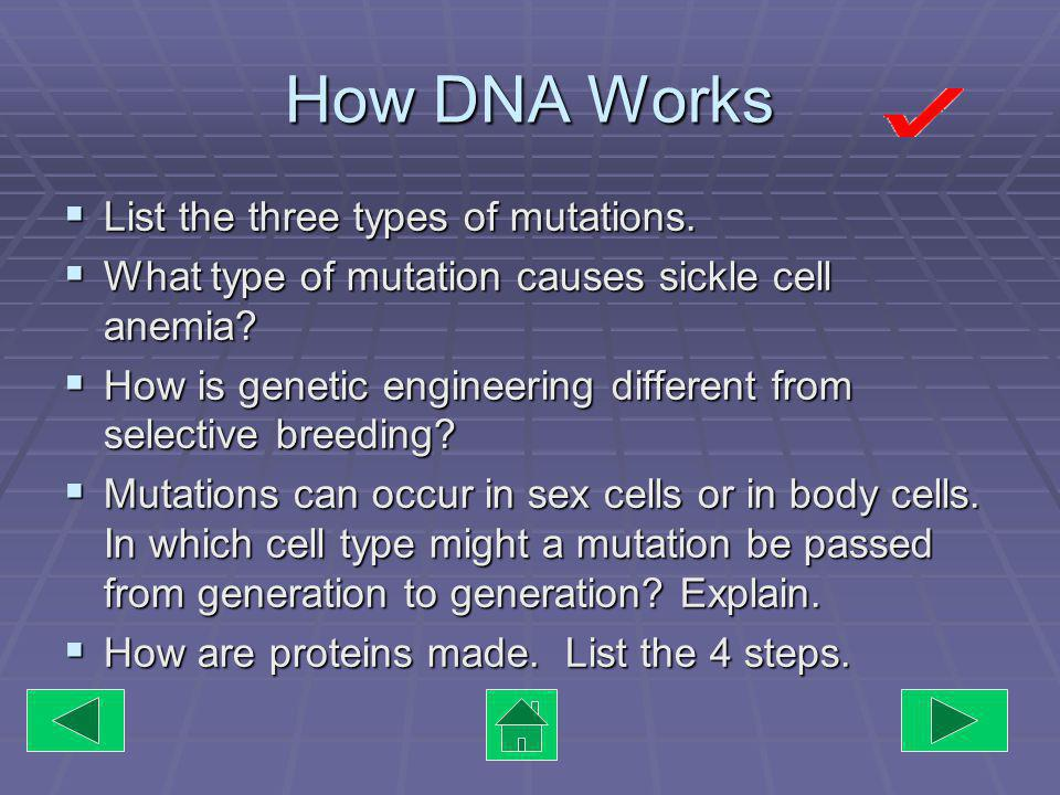 Designer Genes Genetic Engineering is used to: Genetic Engineering is used to: Manufacture proteins Manufacture proteins Repair damaged genes Repair damaged genes Identify individuals who may carry Identify individuals who may carry an allele for a disease The tobacco plant above had the firefly gene inserted in its DNA.