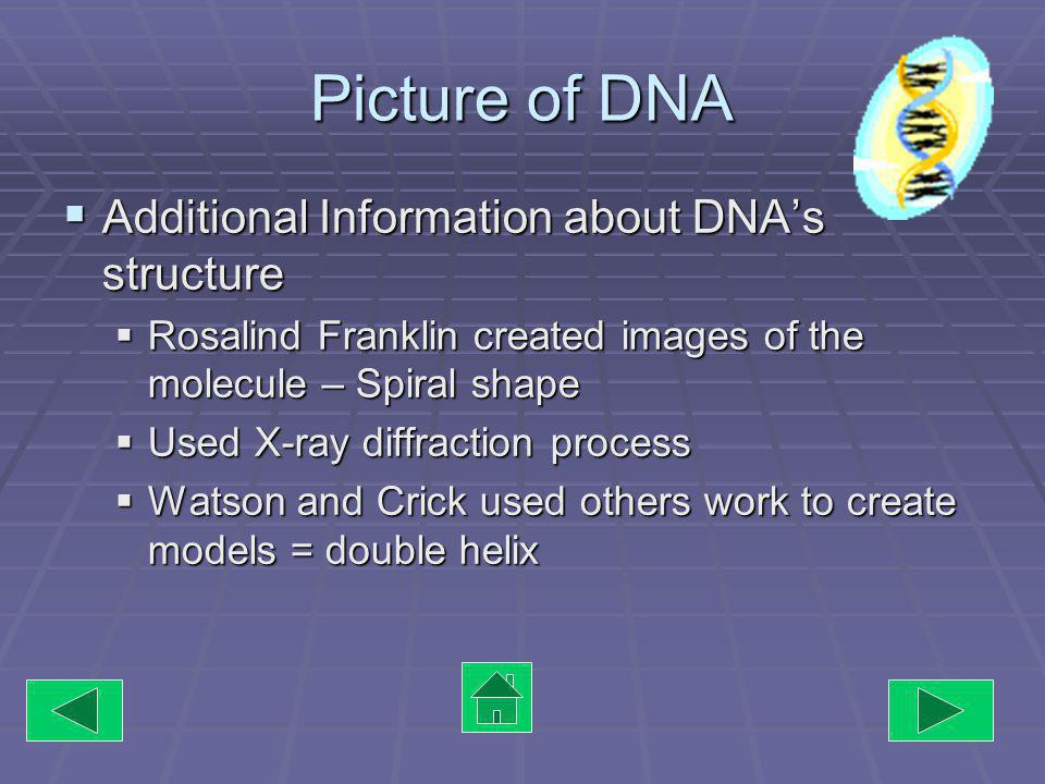 Picture of DNA Additional Information about DNAs structure Additional Information about DNAs structure Rosalind Franklin created images of the molecule – Spiral shape Rosalind Franklin created images of the molecule – Spiral shape Used X-ray diffraction process Used X-ray diffraction process Watson and Crick used others work to create models = double helix Watson and Crick used others work to create models = double helix
