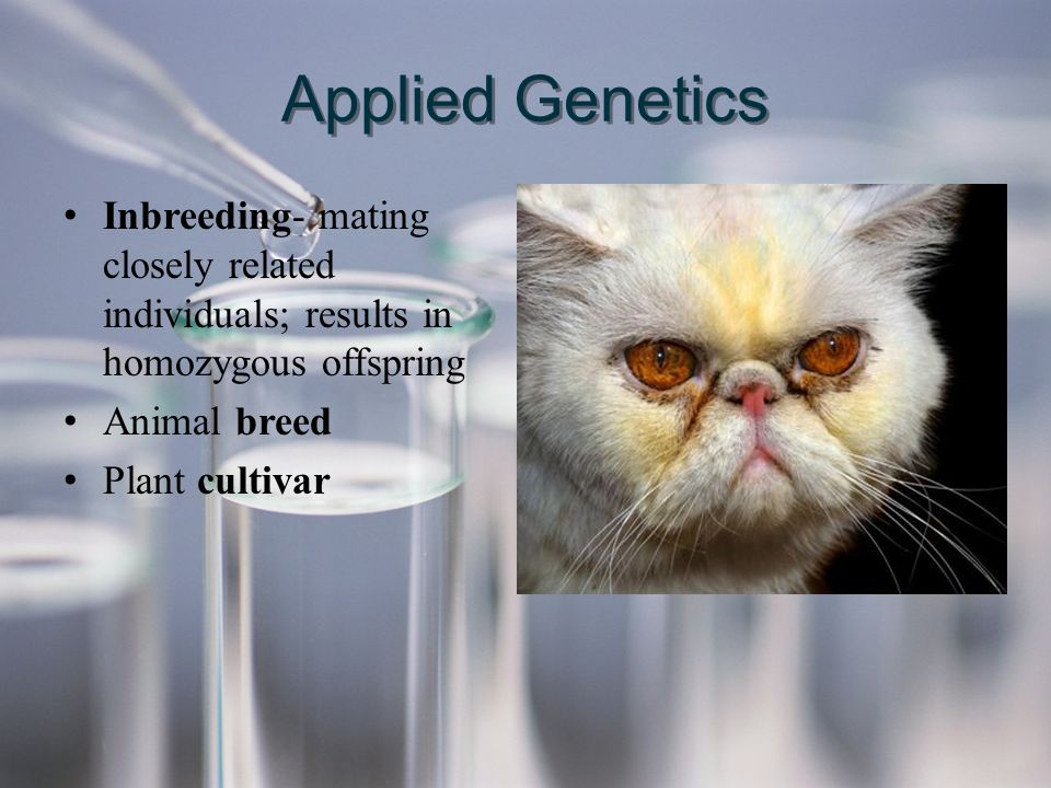 Applied Genetics Inbreeding- mating closely related individuals; results in homozygous offspring Animal breed Plant cultivar