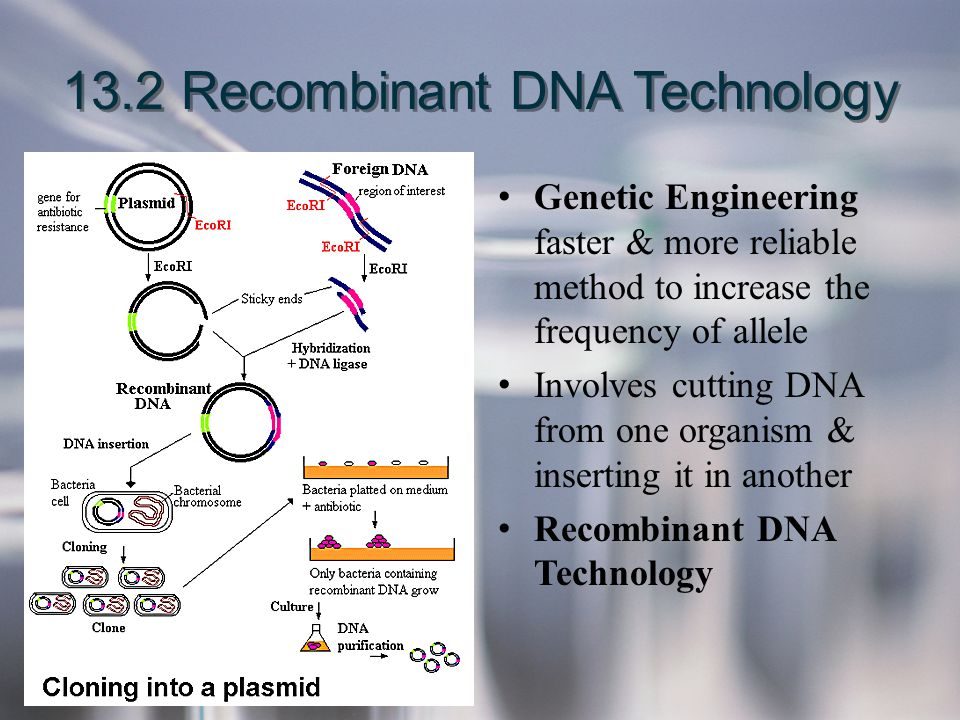 13.2 Recombinant DNA Technology Genetic Engineering faster & more reliable method to increase the frequency of allele Involves cutting DNA from one or