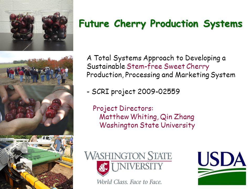 Mechanical Harvest of Stem-Free Cherry