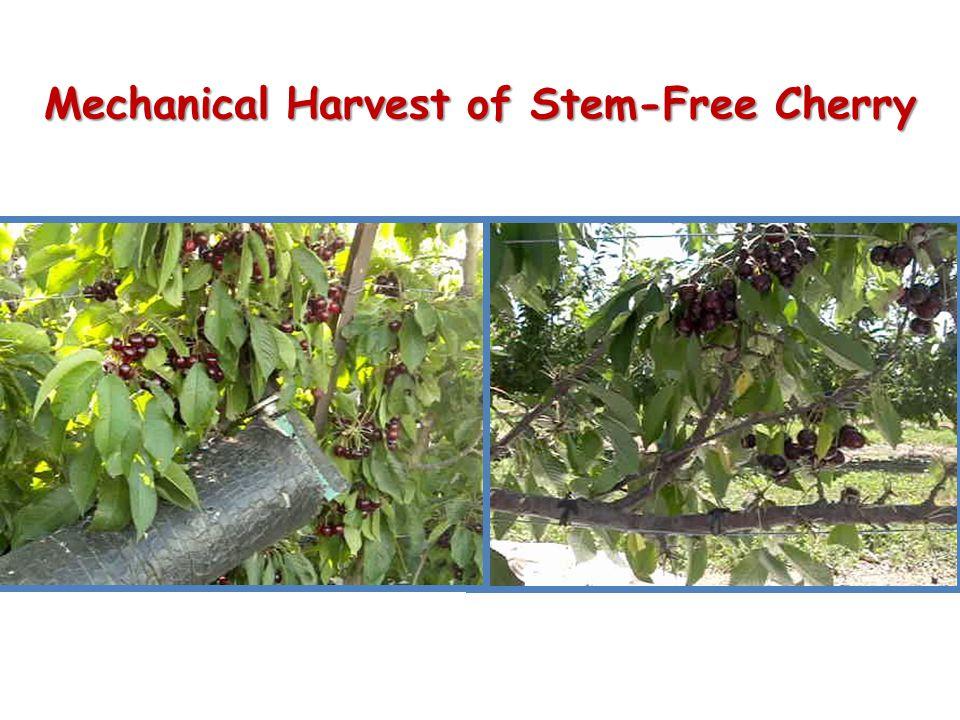 Result of Mechanical Harvest