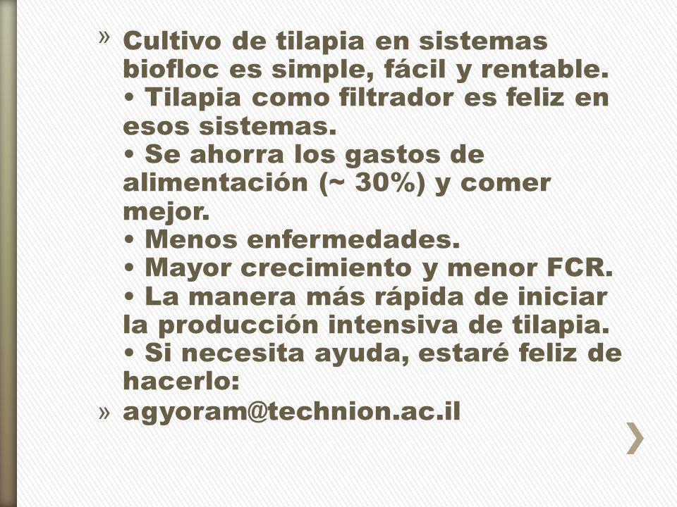 » Cultivo de tilapia en sistemas biofloc es simple, fácil y rentable. Tilapia como filtrador es feliz en esos sistemas. Se ahorra los gastos de alimen