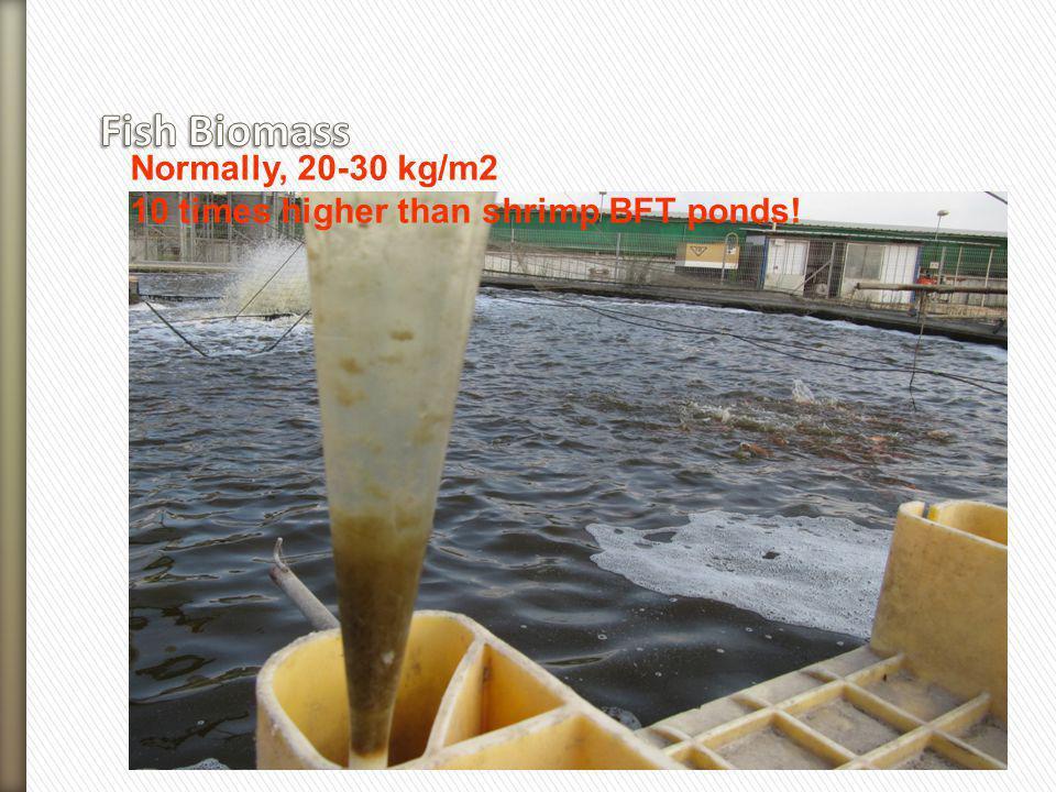 Normally, 20-30 kg/m2 10 times higher than shrimp BFT ponds!