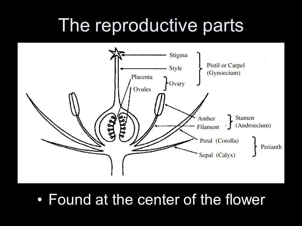 The reproductive parts Found at the center of the flower