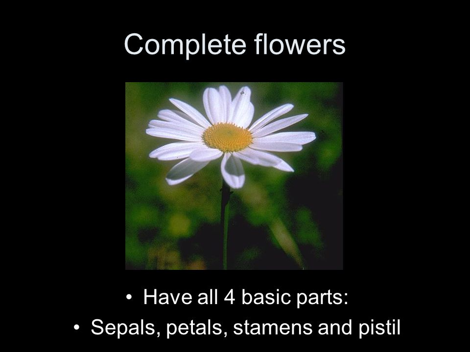 Complete flowers Have all 4 basic parts: Sepals, petals, stamens and pistil