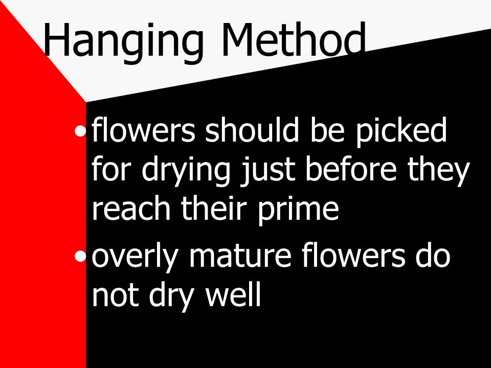 Hanging Method flowers should be picked for drying just before they reach their prime overly mature flowers do not dry well