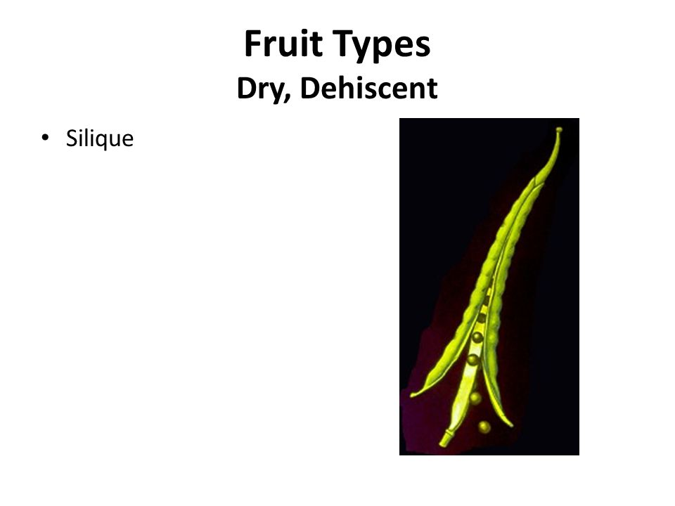Silique Fruit Types Dry, Dehiscent
