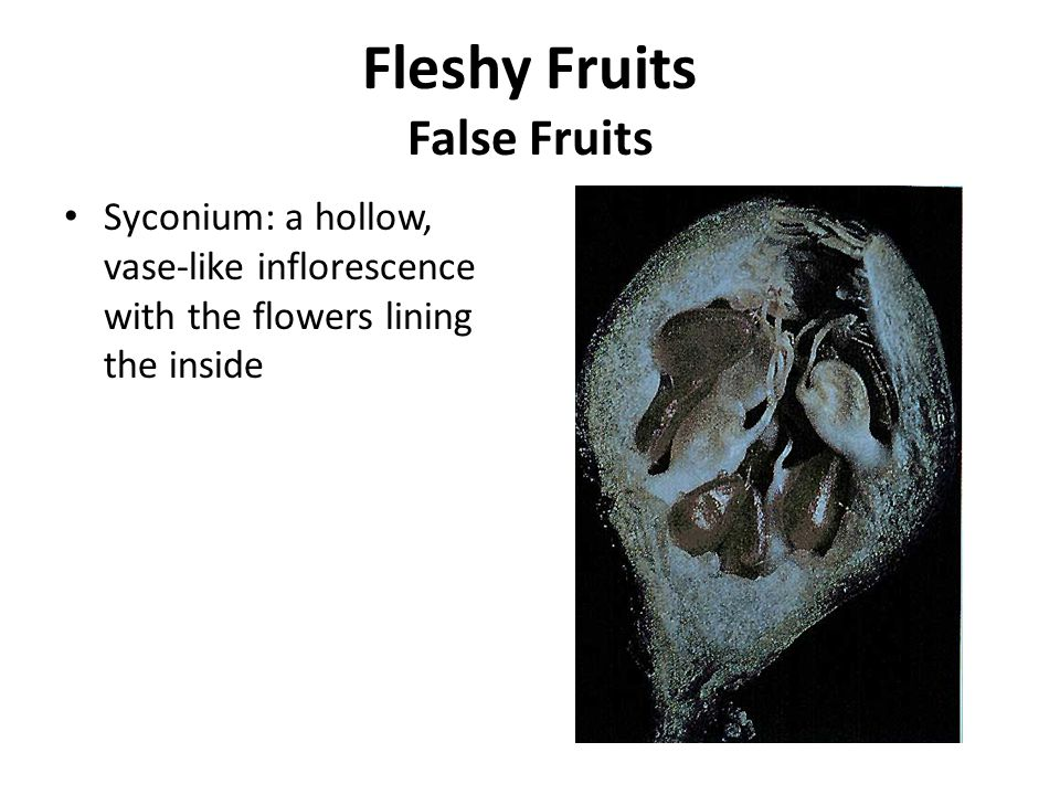 Syconium: a hollow, vase-like inflorescence with the flowers lining the inside Fleshy Fruits False Fruits