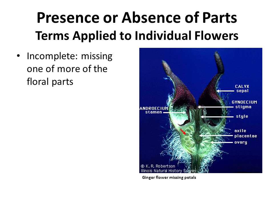 Perfect (=bisexual): flower with both stamens and carpels Presence or Absence of Parts Terms Applied to Individual Flowers Grape flower with stamens and carpels