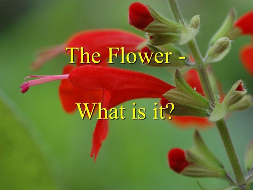 The Flower What is it.from Schleiden 1855 foliar theory of flower - J.W.