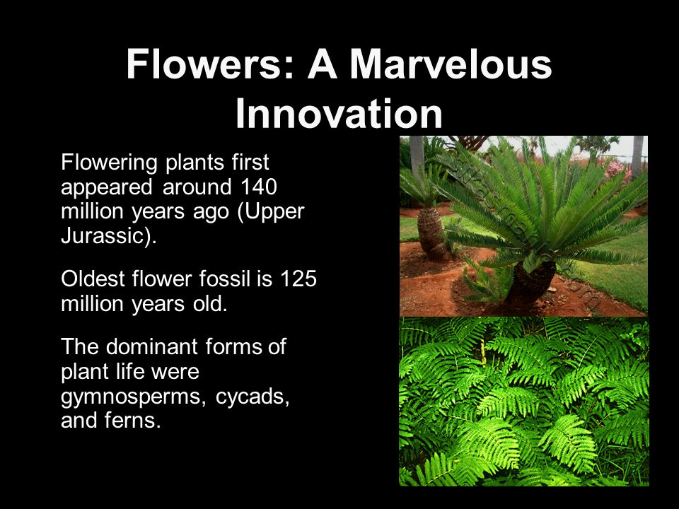 Today Flowering plants (Angiosperms) are now the dominant form of plant life over most of the earths land surface.