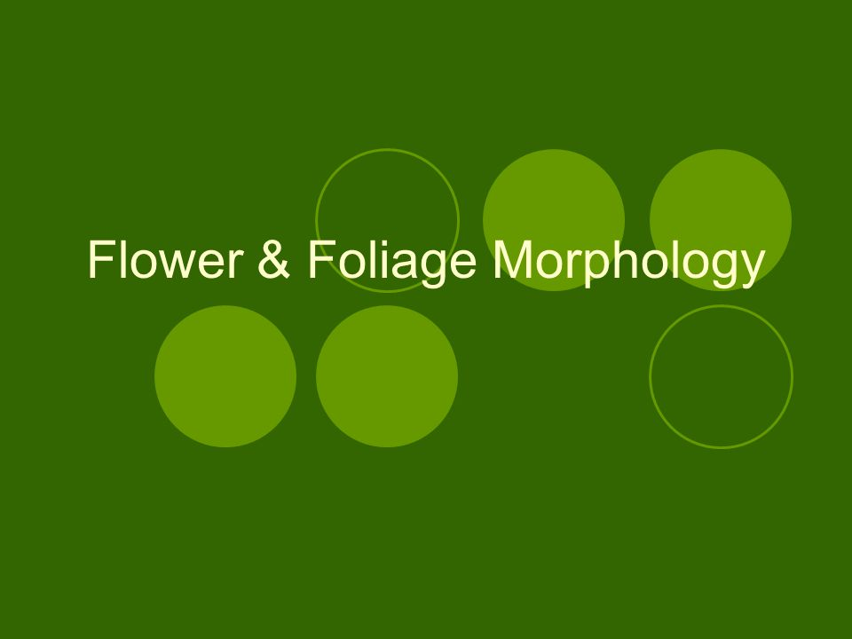 Flower Nomenclature Stamens-male reproductive parts of the flower Androecium-collective term of all male parts meaning house of man Anther-pollen-bearing portion of the stamen Filament-stalk of the stamen bearing the anther