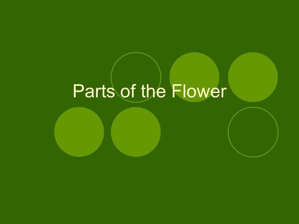 Flower Nomenclature (name of parts) Flower parts Sepals Calyx Tepals Perianth Petals Corolla Stamen Pistil Receptacle