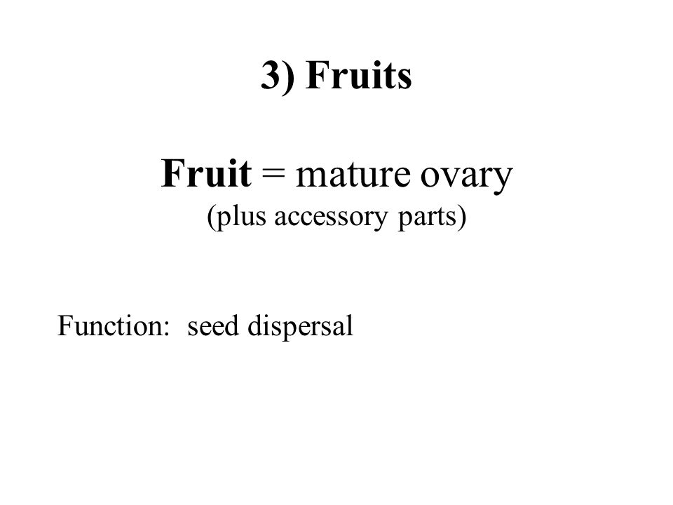 3) Fruits Fruit = mature ovary (plus accessory parts) Function: seed dispersal