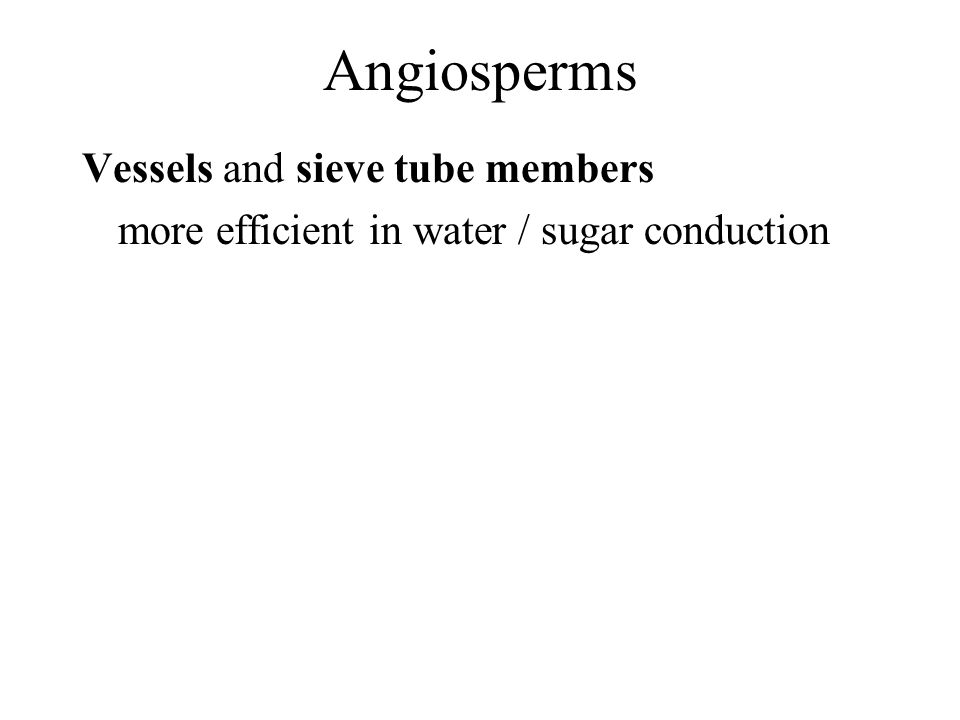 Angiosperms Vessels and sieve tube members more efficient in water / sugar conduction